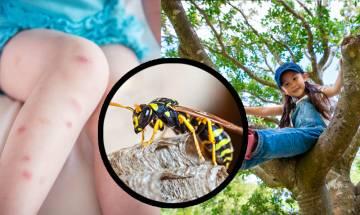 大埔八仙嶺7行山客被黃蜂螫送院  攀山專家教授遇蜂應變措施