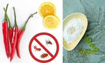 春天驚蟄蛇蟲鼠蟻齊出動|10種家居常備驅蟲物品-趕走曱甴、跳虱、書蟲