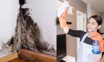發霉潮濕情況嚴重 3招除霉方法  清走天花板牆壁黴菌 用酒精就OK?
