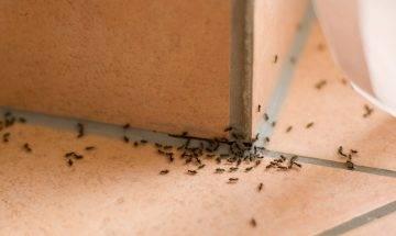 天氣潮濕害蟲入屋 天然+化學方法徹底消滅7大有害昆蟲