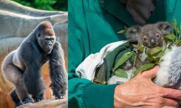 【停課不停學】世界9大動物園水族館免費直播  足不出戶 實時直擊動物生活百態