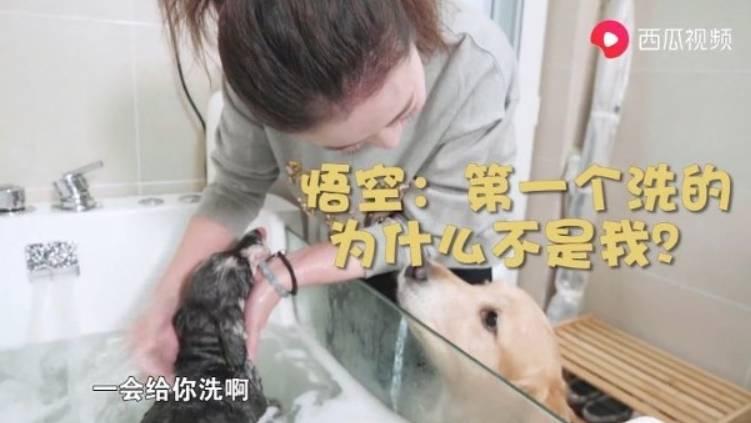 53歲周海媚北京萬呎豪宅曝光 2百呎專屬睡房畀狗仔