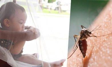 日本腦炎史上年紀最小患者 3個多月大男嬰中招  5大防蚊措施不能少