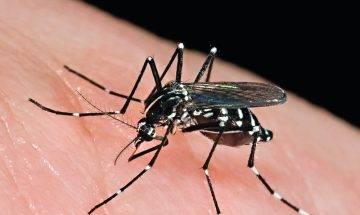 嚴重蚊患易染登革熱日本腦炎 做好預防接種疫苗