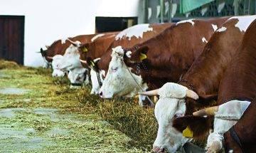 瘋牛症可致海綿腦 潛服期可逾16年 該轉食素嗎?