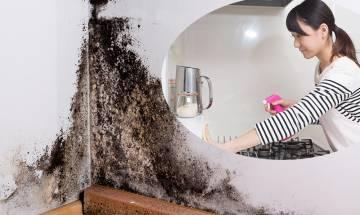 牆壁天花發霉潮濕嚴重|告別漂白水!3個法寶簡易去除回南天黴菌