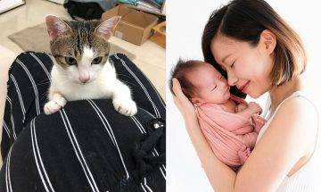 【KissMom專訪】新手媽媽疫情中生B 轉私家醫院只望老公陪產 3貓咪愛錫BB