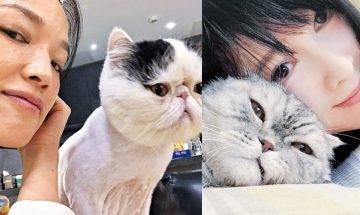 愛貓愛肉球 盤點娛樂圈資深貓奴  女星愛心爆棚領養8隻貓