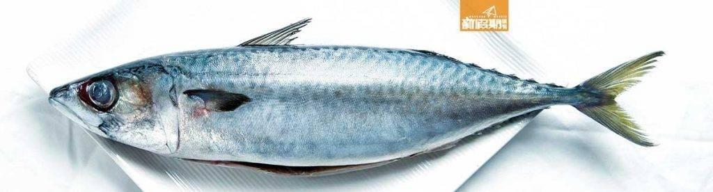 鯖魚含豐富Omega-3