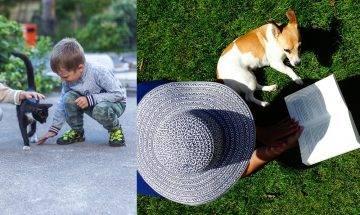 消委會寵物服務參差  寵物移民過程已死 剪毛遭利器傷毀容(持續更新)