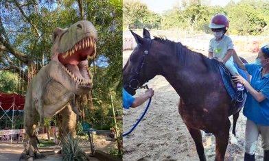 大棠有機生態園$50大小同價 騎馬+大型繩網陣+餵羊+鴕鳥  | 親子戶外好去處