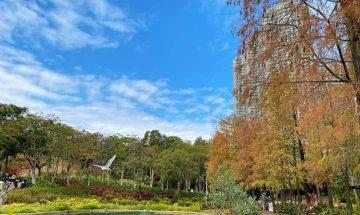 青衣公園紅葉-落羽松已變紅+歐陸式庭院野餐配湖畔美景|親子好去處