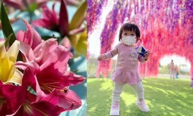 元朗信芯園紫色百合花花海+花隧道打卡  3歲或以下免費 入場費全數買花|附交通方法  親子好去處