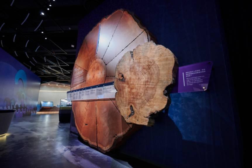 樹輪解碼(圖片:科學館)
