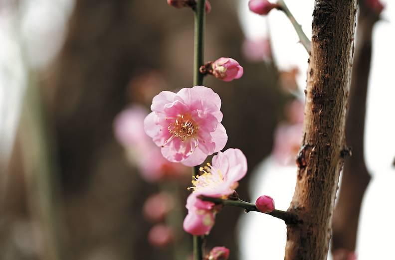 嘉道理農場暨植物園佔地148公頃,每月都有不同花卉盛開。圖片授權:Little twin stars龍鳳寶寶