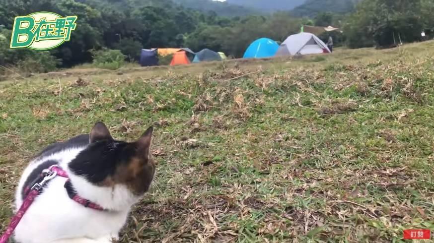 荔枝莊營地平坦,十分適合露營。圖片來源:新傳媒資料庫