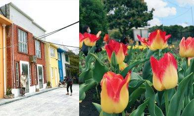 西貢白腊村鬱金香花海+地中海彩色小屋+白腊灣交通路線|親子好去處