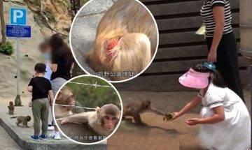 一家大細餵馬騮 將郊野公園當動物園實屬違法|附漁農署遇到猴子應對法