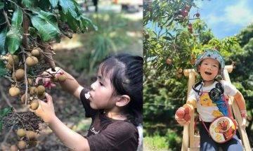 元朗潘媽媽果園全日任玩 小童$90 當小農夫摘有機蔬果+餵羊仔|親子好去處