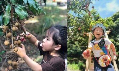 元朗潘媽媽果園全日任玩 小童$99 包一磅自摘龍眼免費  香印提子/香水檸檬|親子好去處