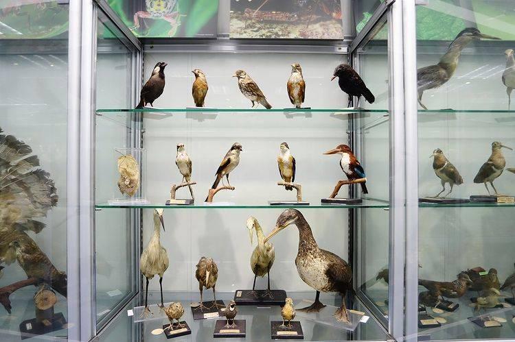 博物館是香港現存最大的其中一個生物標本收藏庫