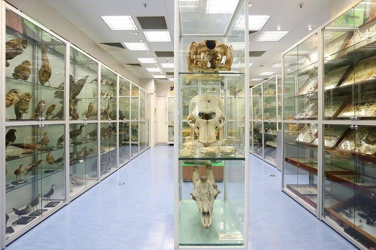 香港生物多樣性博物館位置香港大學嘉道理生物科學大樓南翼