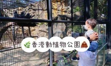 香港動植物公園|哺乳類動物區重開 探馬騮猩猩+賞9月盛開季節花