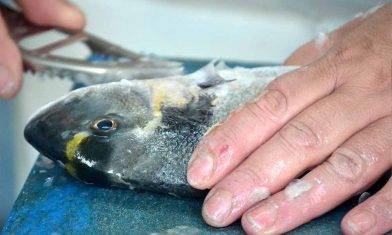 創傷弧菌|處理海鮮要小心!8旬老婦染「創傷弧菌」險截肢+預防貼士