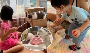 銅鑼灣貓Cafe Cat Here貓貓地|包一杯飲品與貓咪互動 先認識後領養 小朋友首半小時免費