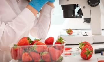 15種健康食物排名公開 附功效 美國最新食物指南